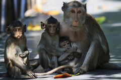 Monkey family in wilderness Stock Photo