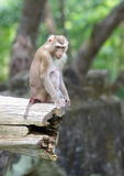 Monkey family at zoo Stock Photos