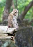 Monkey family at zoo. Animal photo of monkey family at zoo Stock Photos