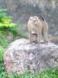 Monkey family at zoo Stock Photography