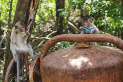 Monkey feast. A couple of monkeys feast behind some old rusted equipment Royalty Free Stock Photo