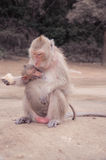Monkey feeding a child Royalty Free Stock Photography