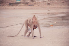 Monkey feeding a child Royalty Free Stock Images