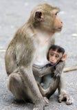 Monkey. Feeding, life in thailand Stock Photos