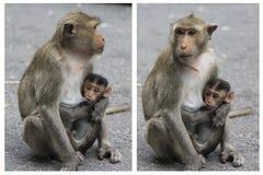 Monkey. Feeding, life,Wildlife Stock Image