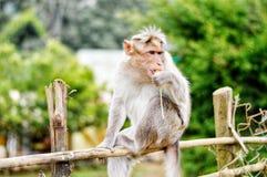 Monkey on Fence Royalty Free Stock Images