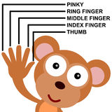 Monkey fingers. Illustration of a monkey showing different finger names Stock Photography