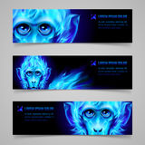 Monkey Fire Banners. Set of banners with Monkey head in blue flame Royalty Free Stock Image