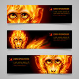 Monkey Fire Banners. Set of banners with Monkey head in orange flame Stock Image