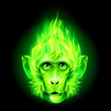 Monkey fire head Royalty Free Stock Images