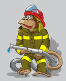 Monkey -  fireman. The cheerful monkey is dressed in a protective form of the firefighter, keeps in its hands a fire hose Stock Photo