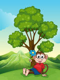 A monkey with a flower sitting under the tree Stock Photo
