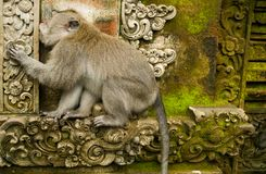 Monkey Forest Stock Images