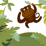 Monkey in forest Royalty Free Stock Photos