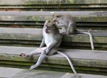 Monkey Forest,Bali Indonesia Stock Photos