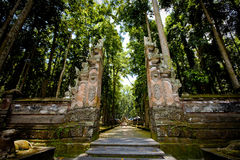 Monkey forest in Bali (Sangeh) Stock Image