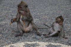 Monkey forest Stock Photos