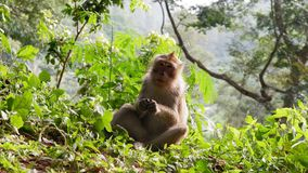 Monkey in the forest. Cute Monkey family in the indonesian forest stock photo