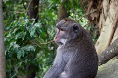 Monkey forest cute funny creature. stock image