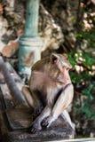 A monkey Royalty Free Stock Image
