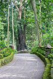 Monkey Forest Footpath Royalty Free Stock Photos
