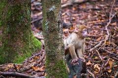 Monkey forest - Infant sitting next to tree Stock Image