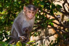 Monkey in the forest Royalty Free Stock Image