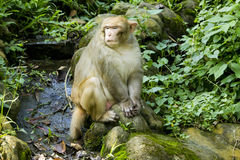 Monkey in forest Stock Photos