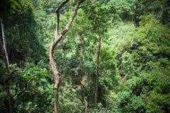 Monkey forest in Ubud, Bali Royalty Free Stock Image