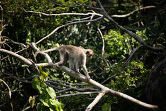 Monkey in forest Stock Photo