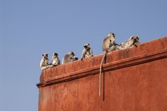 Monkey Fort Stock Photos