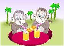 Monkey Friends with refreshment. Royalty Free Stock Image