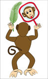 Monkey frolic with mirror. Monkey face in mirror. Monkey holding a palm leaf. Royalty Free Stock Images