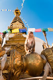 Monkey in front of Monkey Temple. In Kathmandu Nepal Royalty Free Stock Photo