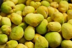 Monkey fruit Royalty Free Stock Images
