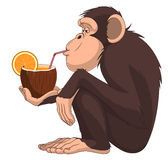 Monkey with a fruit cocktail Stock Photo