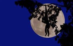 Monkey full moon Royalty Free Stock Photography