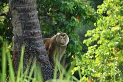 Monkey in garden Royalty Free Stock Photos