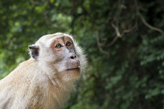 Monkey Gesicht Stockbild