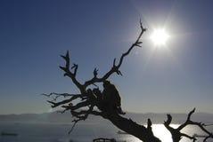 Monkey in Gibilterra, una vista tipica di più alta parte del pe Immagini Stock
