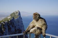 Monkey in Gibilterra, una vista tipica di più alta parte del pe Immagine Stock Libera da Diritti