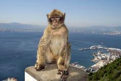 Monkey at Gibraltar stock photography