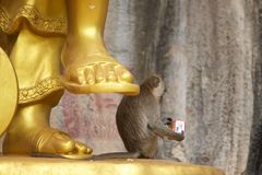 Monkey by a golden Chinese god statue Royalty Free Stock Images