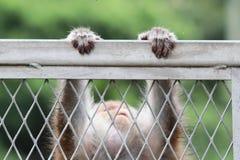 Monkey at golden hill, hong kong Royalty Free Stock Photos