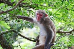 Monkey at golden hill, hong kong Stock Photography