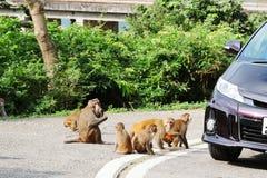Monkey at golden hill, hong kong Stock Images