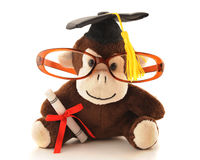 Monkey Grad Royalty Free Stock Image