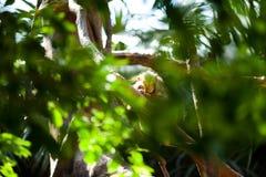 Monkey in a green bush Stock Photo