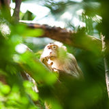 Monkey in a green bush. At the zoo Royalty Free Stock Images