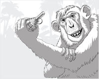 A monkey with a grenade. The monkey is a terrorist threatens to detonate the grenade Royalty Free Stock Photos